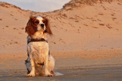 מעבר עם כלב לסיני